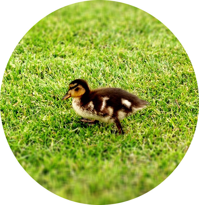 Jennifer Michie Duckling