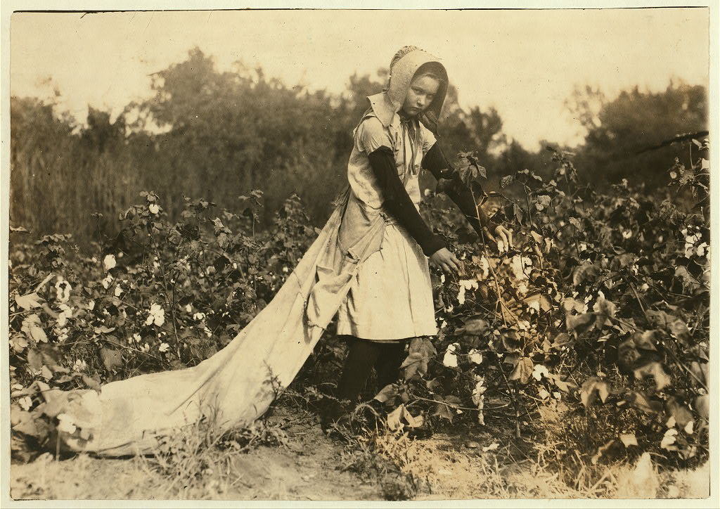 Lewis Hine Cotton Picker