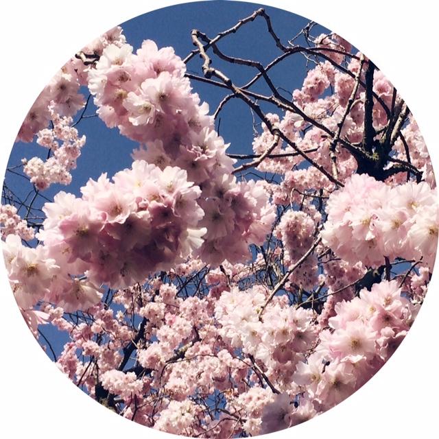 Jennifer Michie Regent's Park Blossoms