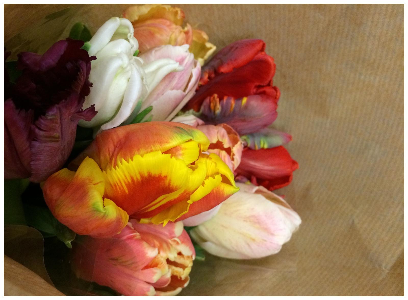 Jennifer Michie Tulips