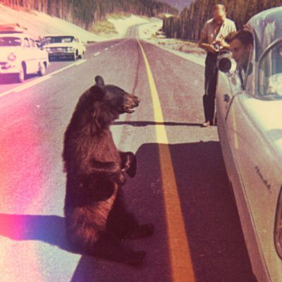 Vintage Bear Photograph