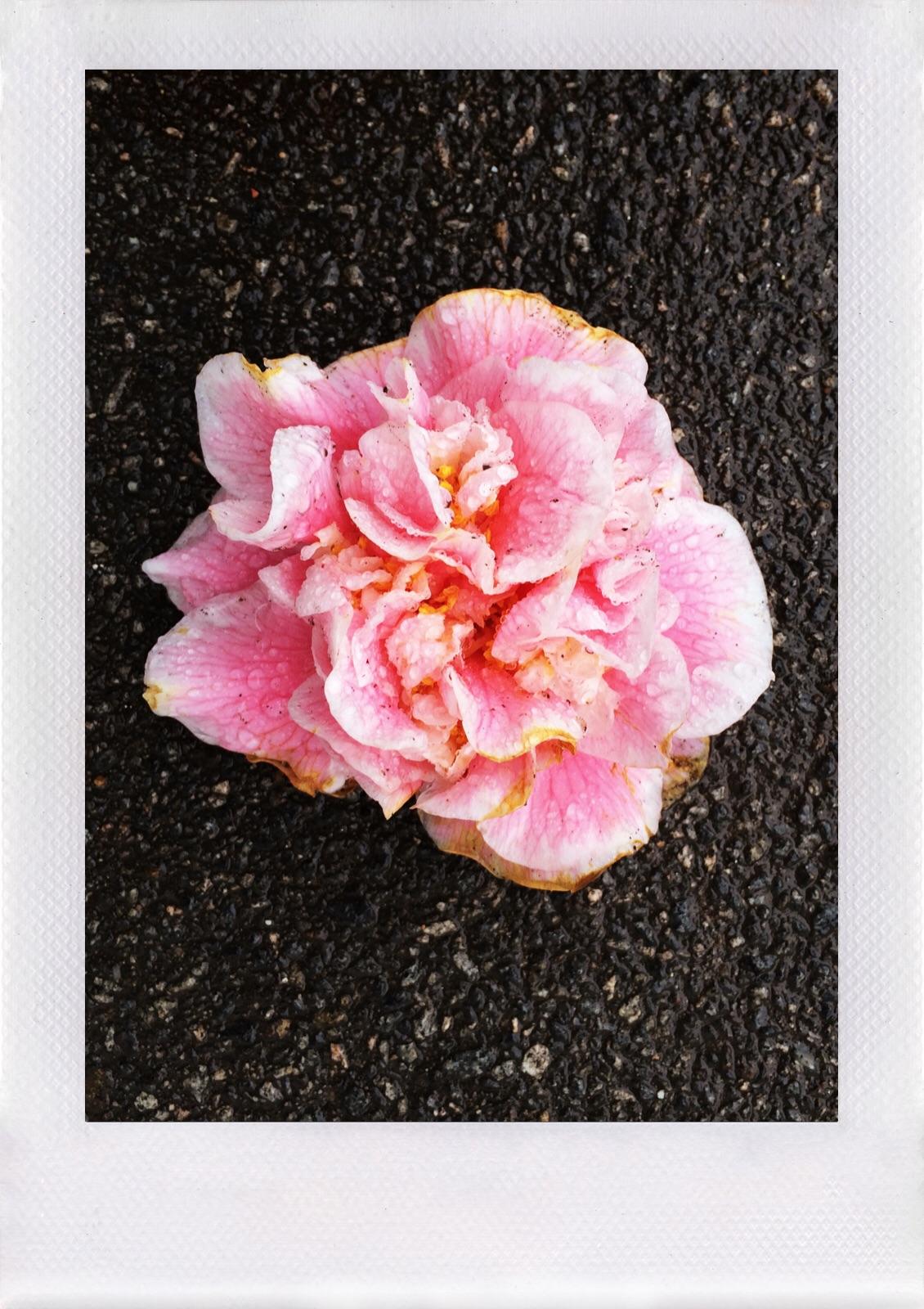 Jennifer Michie Rain Blossom