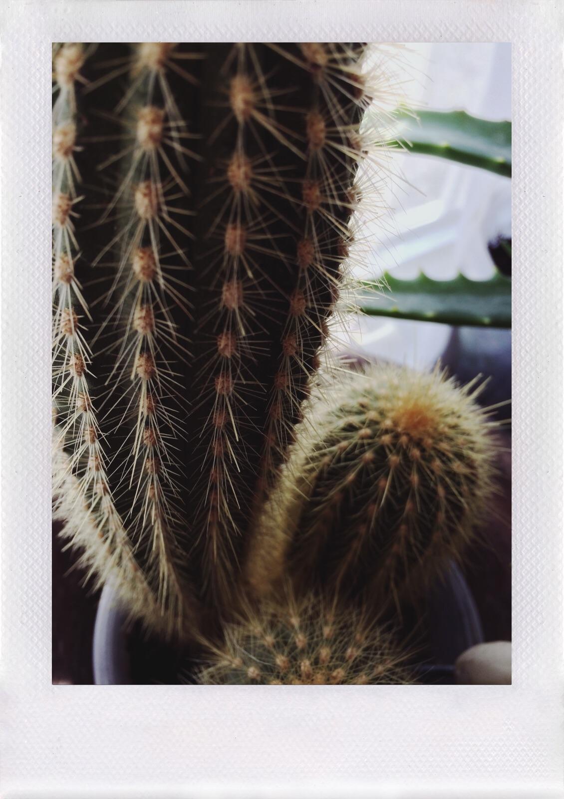 Jennifer Michie Cactus 2