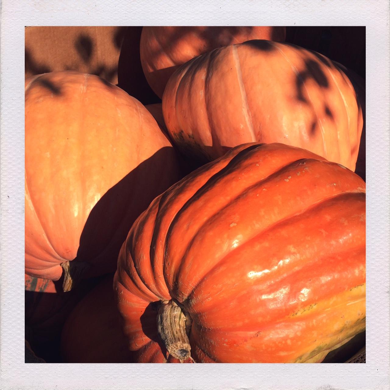 jennifer-michie-pumpkins