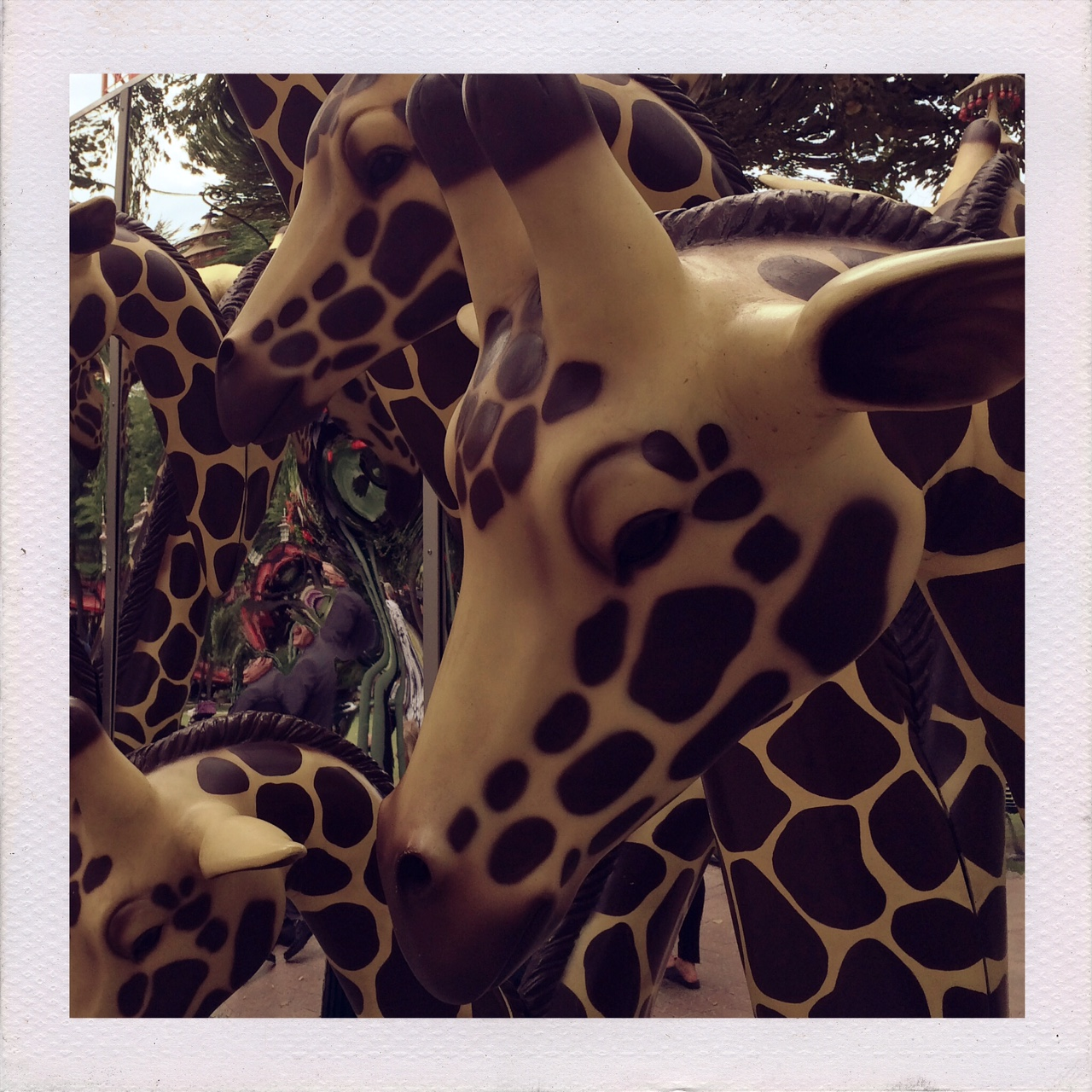 Giraffes at Tivoli