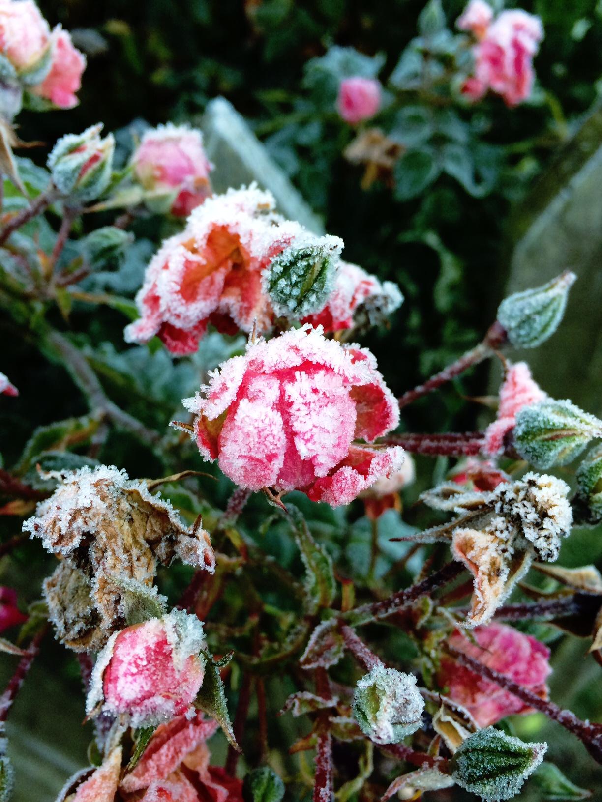jennifer-michie-frost-4